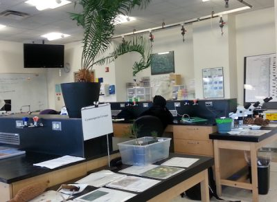 Biology Lab at UConn Stamford